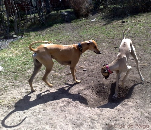 Elsa gräver ( som vanligt )