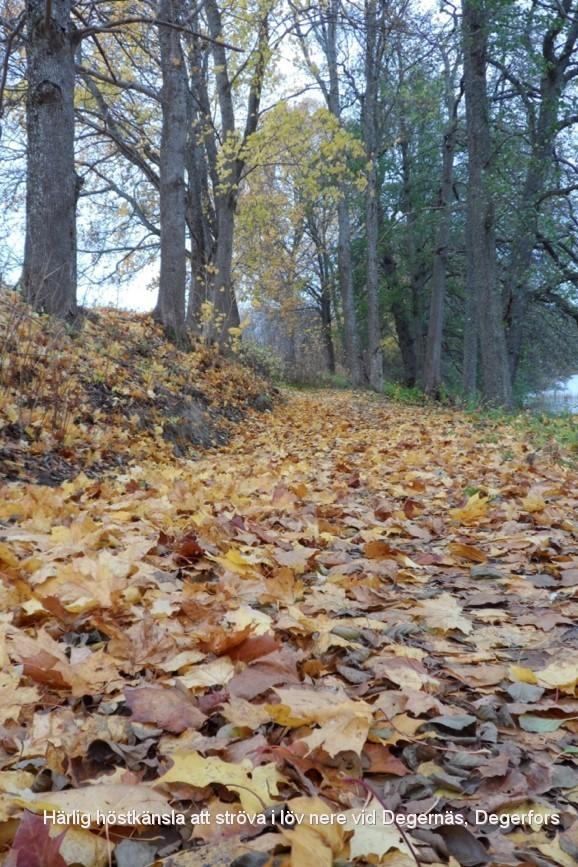 Härlig höstpromenad i prassliga löv i Degernäs, Degerfors