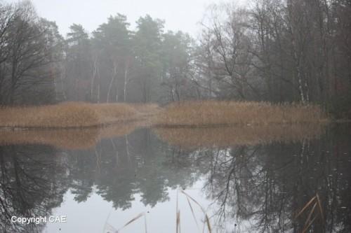 Vasasjön