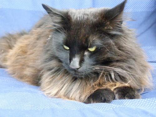 Kapten Morgan, som vi tog från katthemmet. Han är stolt, blyg och faktiskt lite klumpig.
