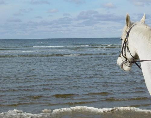 Nisse vid havet