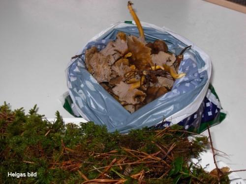 svamp plockad i slutet av november