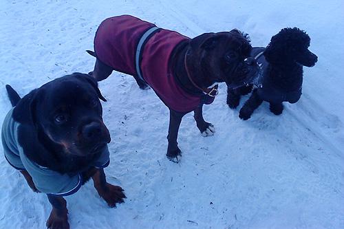Niro, Doris & Cuda