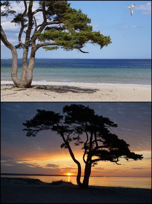 Vacker tall med utsikten över stranden och havet vid Åhus