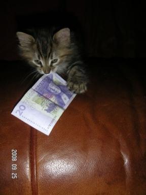 vad katten tog pengarna vägen?