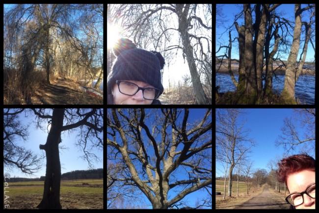 Träden och naturen ger mig mycket kraft
