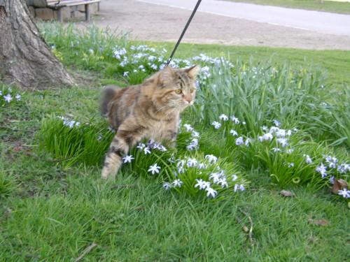 katt + blommor