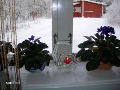 Doftljus i norrfönster