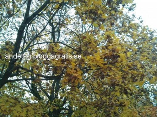 Löv..löv..löv...men jag älskar att titta uppåt på löv