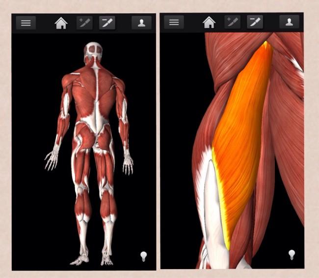 iMuscle2 app - muskler och tydliga övningar till träning