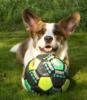 Frodo loves to play football