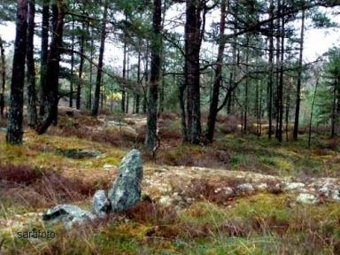 stenen markerar tomgränsen mot mossen