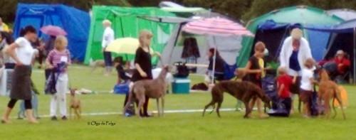 barn med hund Tyra&Dorinda i greyhoundsringen