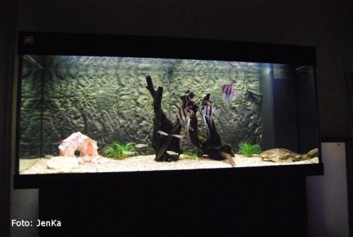 Vårt nys, STOOORA akvarium.. (nov -09)