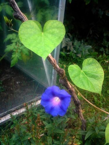 Blomma för dagen