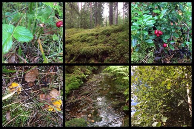 Skogspower - skogens energi är mäktig