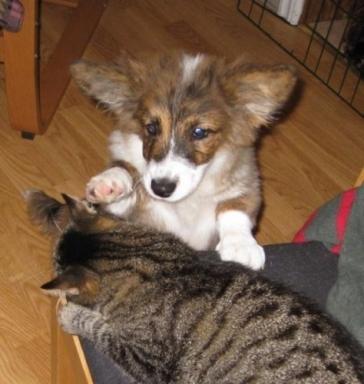 Fenja och hennes katt
