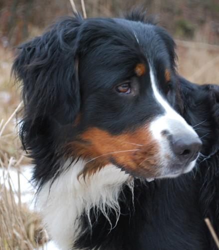 Dahlia (Lovis) som bor tillsammans med Tyson i Kallinge