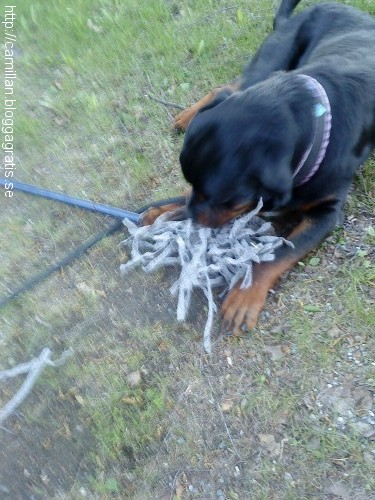 En skurmopp som hittades i Munksund