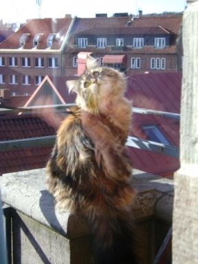 Athena på balkongen