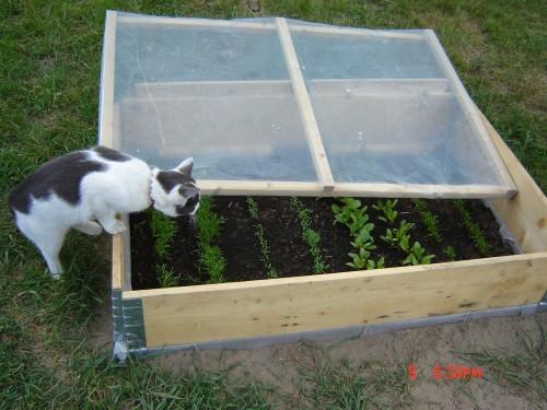 Trädgårdsvakten