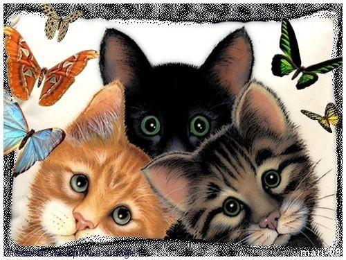 Kattens Dag 29/11-09