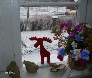 Hälga blossar vackert i julrött