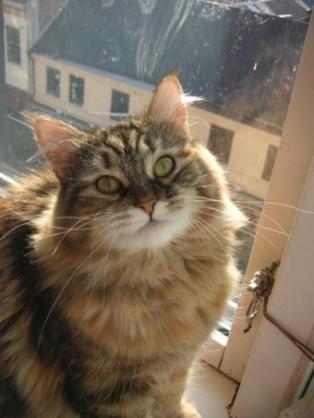 Athena i fönster