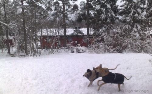 Balto&Elsa