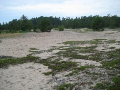 Sand!! Ingen mera skog att gå i.. =)