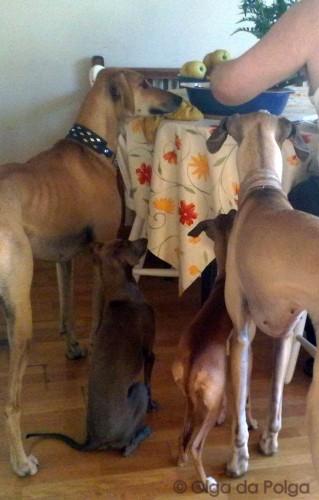 husse tycker om kött - hundarna med !