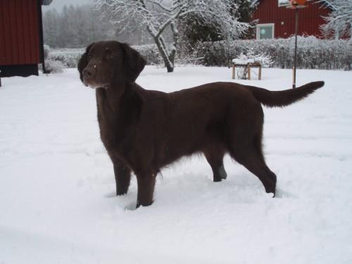 Vega i snön