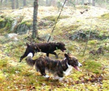 Morf och Tiger hittat ett spår