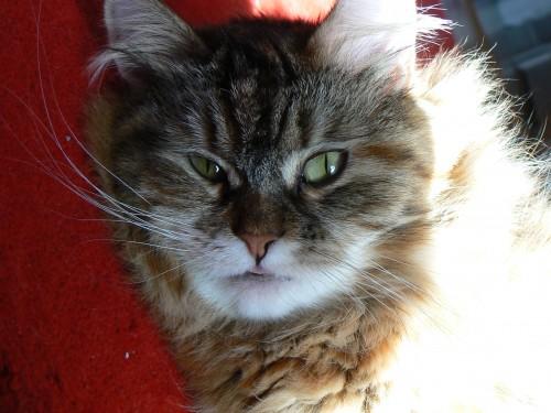Close up Athena