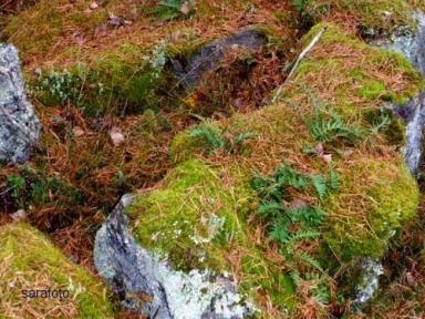 mossa och stensöta dekorerade stenarna