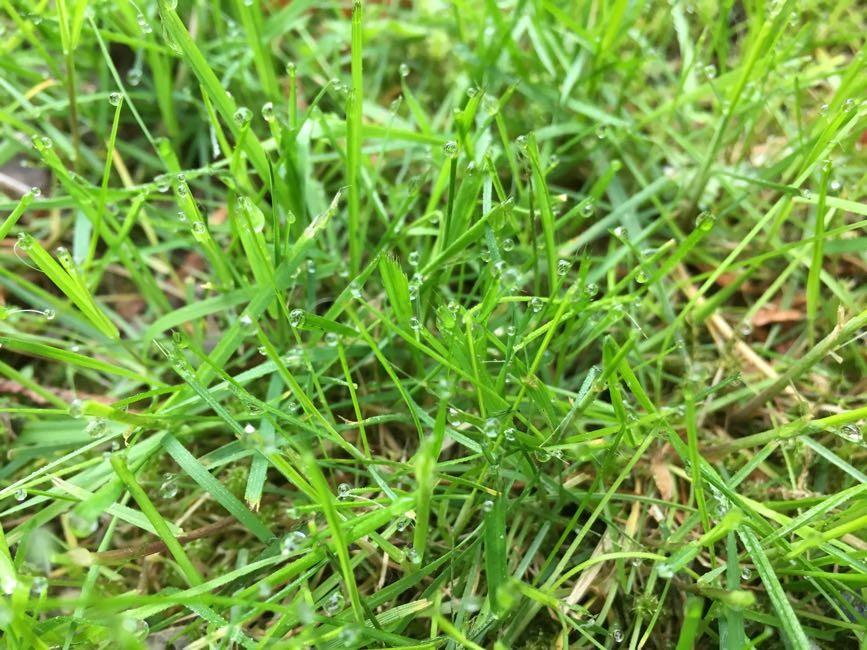 Känner det daggvåta gräset mot fotsulorna