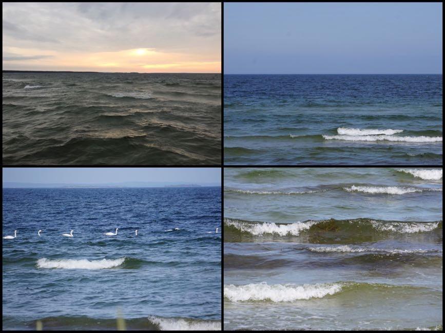 Blåsväder som ger härliga vågor som är så fulla av liv.