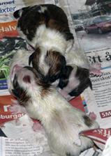Tre nyfödda