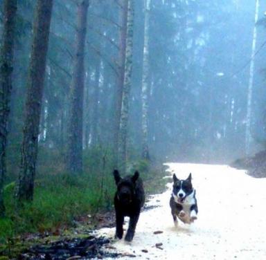 Morf och Tiger kapplöpning i dimman