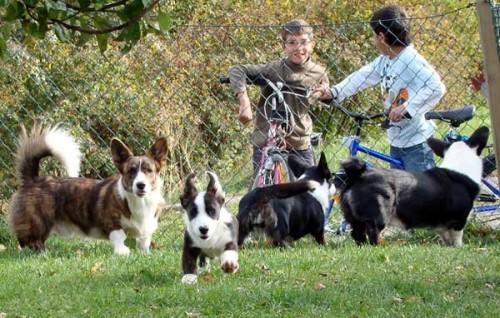 Bilbo, Belle, Holly o Bamse med publik