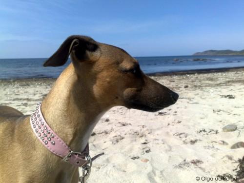 Dorinda vid stranden
