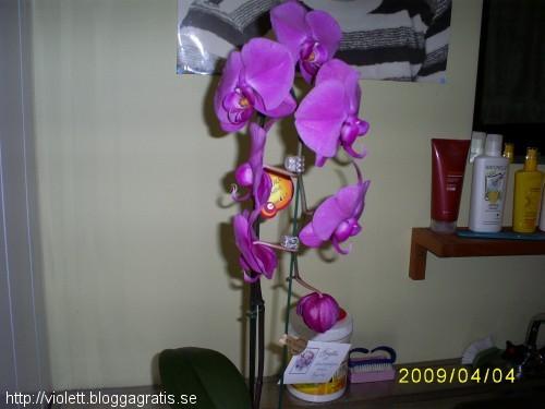 orkidé från Birgitta
