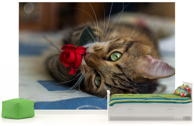 djur tapet katt söt fototapet