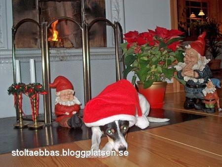 Julhunden Stolta Ebba