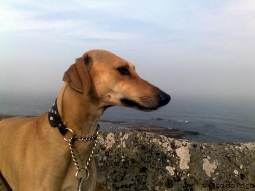 Balto ser ut över havet
