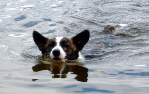 Saga simmar kom på 5:e plats i fototävling