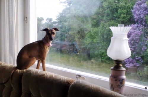Dorinda i fönster