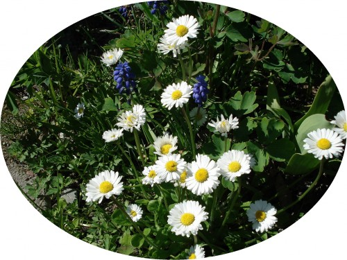 Blommor finns under snön