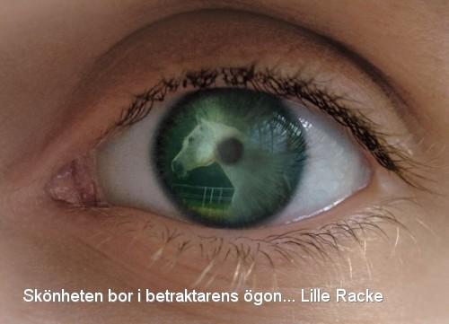 Racke öga