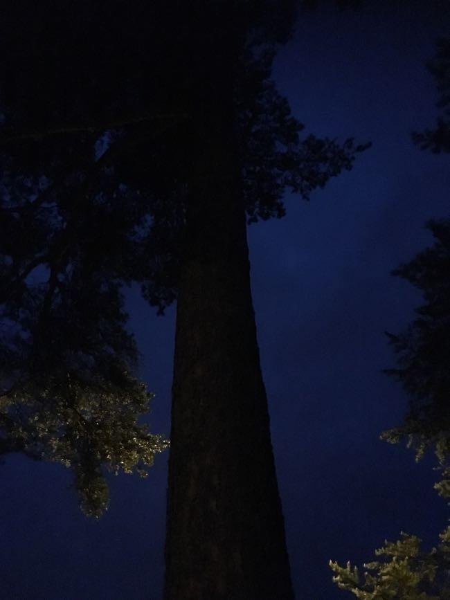krama eller luta dig mot ett träd
